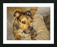 Dog Drawing (14) Picture Frame print