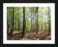 Landscape (51) Picture Frame print