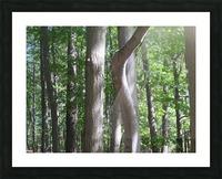 Landscape (267) Picture Frame print