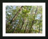 Landscape (108) Picture Frame print