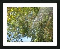 Landscape (302) Picture Frame print