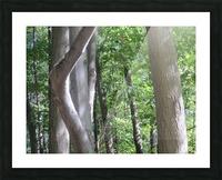 Landscape (266) Picture Frame print