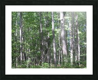 Landscape (87) Picture Frame print