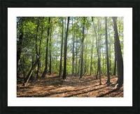 Landscape (37) Picture Frame print