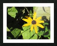 Flowers (62) Picture Frame print