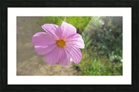 Flowers (83) Picture Frame print