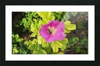 Flowers (24) Picture Frame print