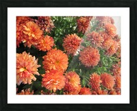 Flowers (53) Picture Frame print