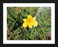 Flowers (35) Picture Frame print