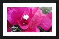 Flowers (95) Picture Frame print