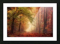 Colorful autumn forest Picture Frame print