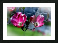 Dogwood 2 Picture Frame print