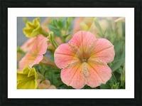Orange Flowers Photograph Picture Frame print