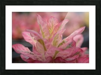 Pink Flower Photograph Picture Frame print