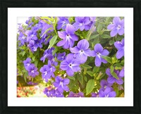 Purple Flowers Photograph Picture Frame print