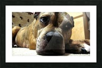 dog Picture Frame print