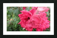 Flower (9) Picture Frame print
