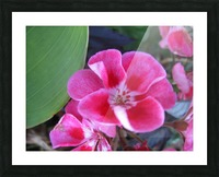 Flower (2) Picture Frame print