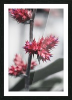 spiked flower Picture Frame print