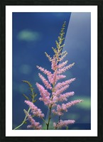 Pink Floral Dow Gardens 2 062718 Picture Frame print