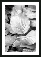 Softly Curving Foliage BW 062618 Picture Frame print
