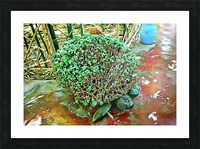 Turtle Pot At Majorelle Gardens Picture Frame print