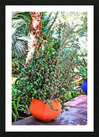 Colorful Plant Pots Marrakesh 10 Picture Frame print