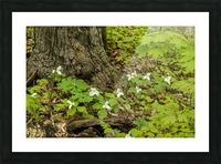 Trillium Woods 10 Picture Frame print