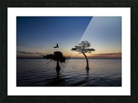 Sunrise on the Nest Picture Frame print