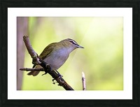 The Tireless Songster Picture Frame print