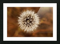 Silver Puff Picture Frame print