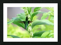 Shades Of Green Picture Frame print