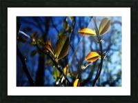 Pop Color Summer Flowers Picture Frame print