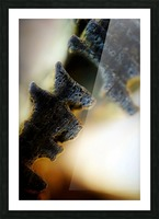 Abstract Macro Nature Photography 111 Picture Frame print