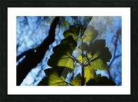 Leaves in the Summer Picture Frame print