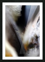 Abstract Macro Nature Photography 99 Picture Frame print