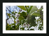 Soft-Focus Flower Scene Picture Frame print
