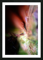 Abstract Macro Nature Photography 84 Picture Frame print