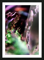 Abstract Macro Nature Photography 70 Picture Frame print