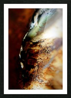 Abstract Macro Nature Photography 68 Picture Frame print
