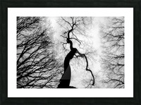 Black and White Abstract Tree 02 Picture Frame print