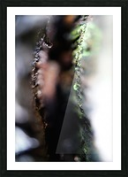 Abstract Macro Nature Photography 54 Picture Frame print