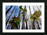 Green and Colourful Nature Scene Picture Frame print
