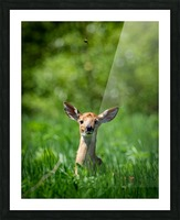 The Fawn and the Bumblebee Picture Frame print