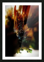 Macro Raindrop Photography Art 23 Picture Frame print