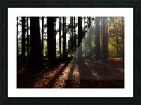 Fantasy Forest 04 Picture Frame print