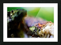 Abstract Macro Nature Photography 08 Picture Frame print