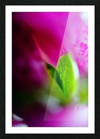 Abstract Macro Pop Colors 01 Picture Frame print