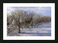 Matin glacé- Iced morning Picture Frame print