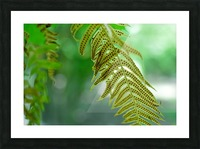 Fern Gully Picture Frame print